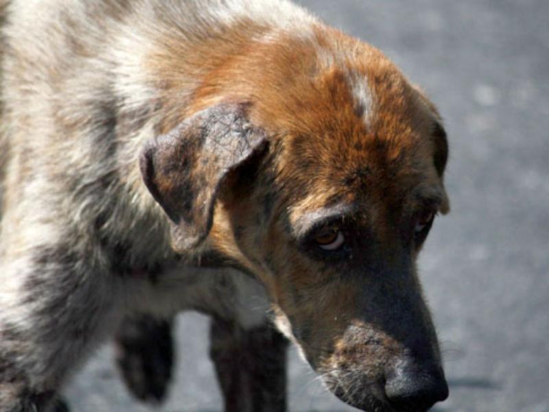 грустная собачка картинка