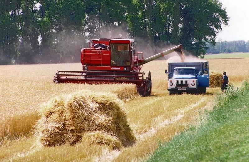 Курская область собрала 2 миллиона тонн зерна