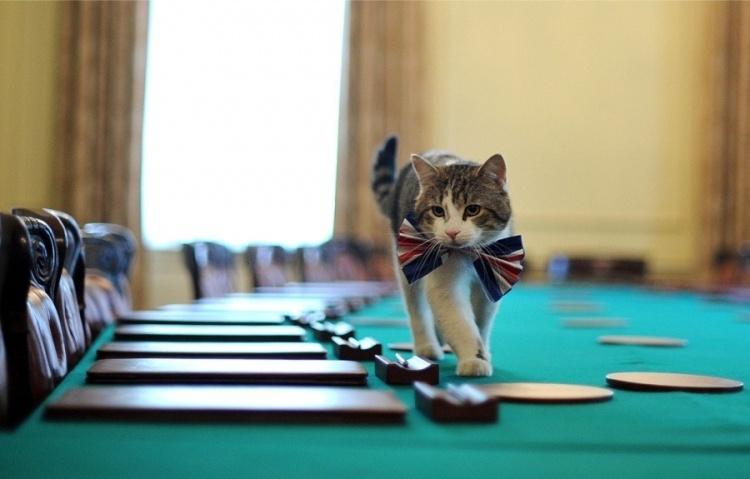 Мэр-козел и кот, опередивший Навального. Как животные занимают государственные посты