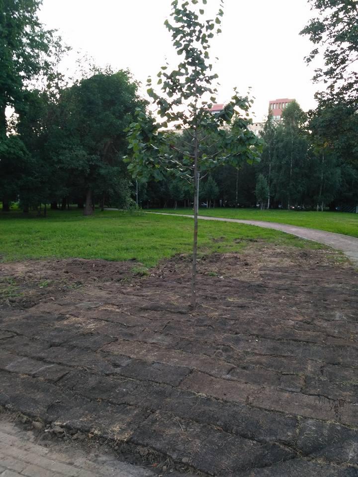 Коммунальные службы в Москве уложили рулонный газон травой вниз и попытались объяснить это