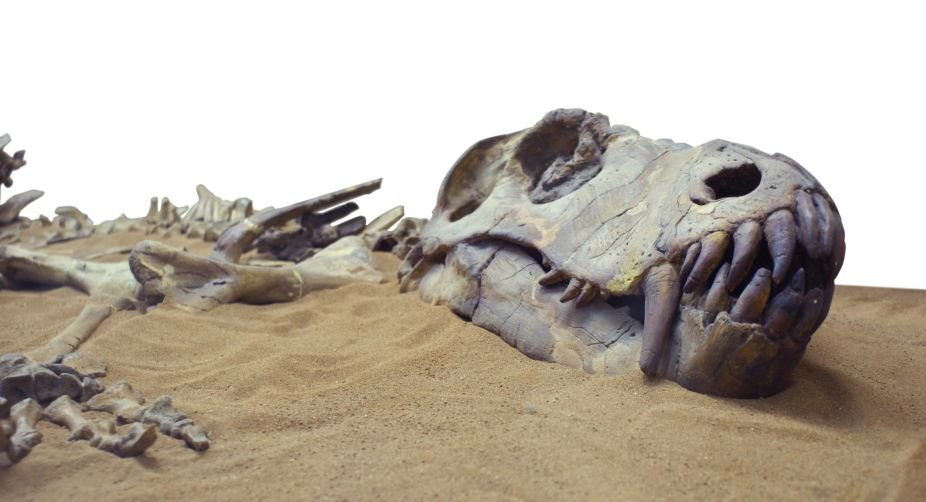 Human fossils found with dinosaur fossils