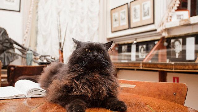 «Все у кота было прекрасно, и была работа». В Доме Булгакова рассказали подробности похищения кота Бегемота