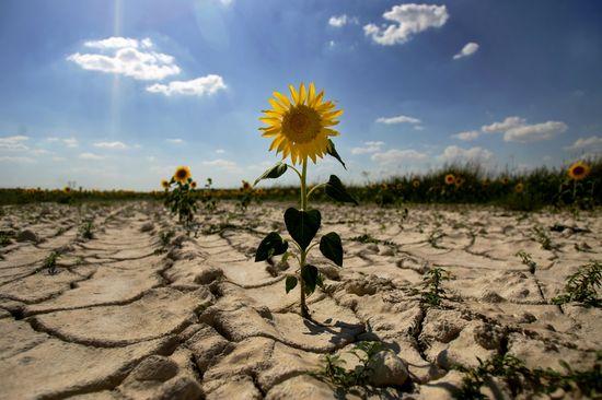 Постпред Порошенко в Крыму назвал засуху на полуострове «российской пропагандой»