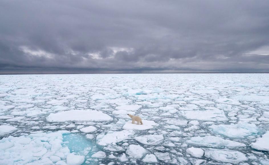 Белые медведи вымрут до конца столетия из-за последствий изменения климата — исследование